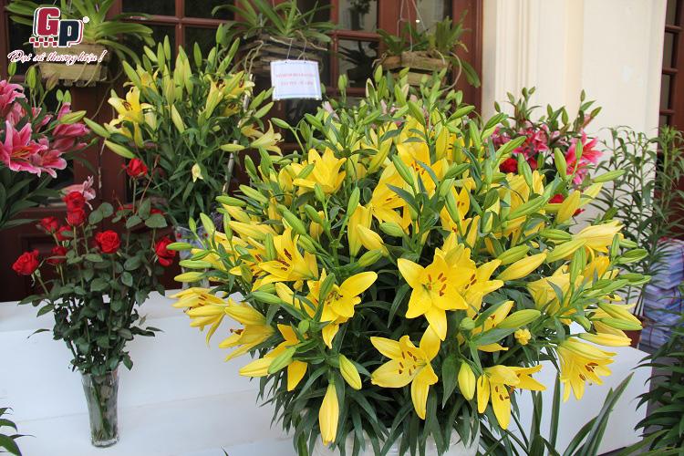 Hội nghị tổng kết các đề án hoa cây cảnh, cây ăn q